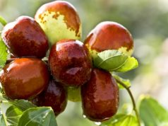 Dates Definition Types Benefits Nutrients Side effects Uses